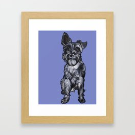 Rupert the Miniature Schnauzer Framed Art Print
