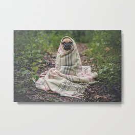 Pug In Blanket Metal Print