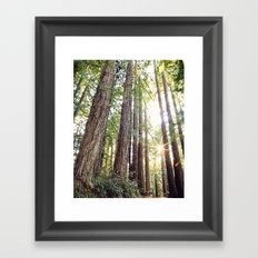 Sunlight Through Redwoods Framed Art Print