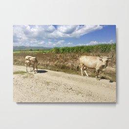 Cows Chillin' Metal Print