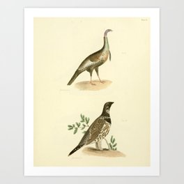 076 Wild Turkey (Meleagris gallopavo) Spruce Grouse (Tetrao canadensis)13 Art Print