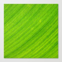 banana leaf Canvas Prints featuring banana leaf by blackpool