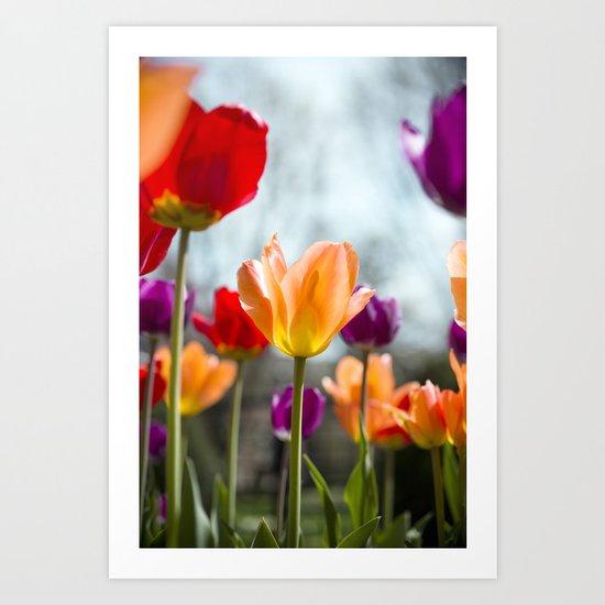 Tulip Dance Art Print