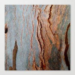 Eucalyptus Tree Bark and Wood Texture 18 Canvas Print