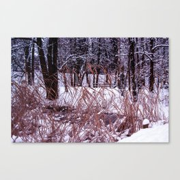 Nix in parco Canvas Print