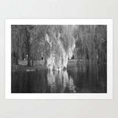 Willows  Art Print