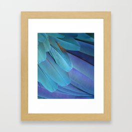 Blue Macaw Feathers Framed Art Print