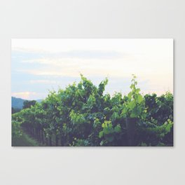 Dusty Vineyard Canvas Print