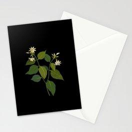 Nyctanthes Sambac Mary Delany British Botanical Floral Art Paper Flowers Black Background Stationery Cards