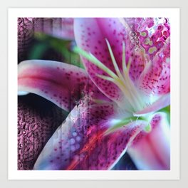 Pink Lily Abstract Art Print