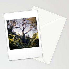 Old Tree, Color Film Photo Stationery Cards