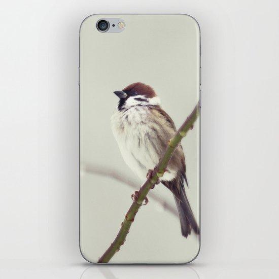 SPARROW iPhone & iPod Skin