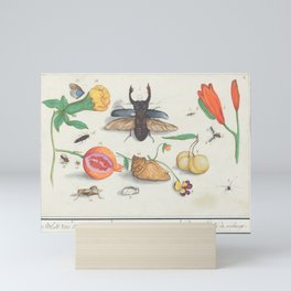 Vintage Natural History Print with Beetle, Fruit and Flowers Mini Art Print