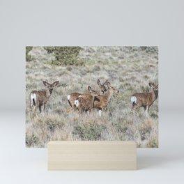 Group of Mule Deer Mini Art Print