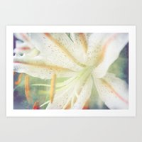 lily Art Prints featuring Lily by Deepti Munshaw