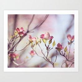 Pink Dogwood Flower Photography, Pastel Lavender Floral, Spring Nature Art Art Print