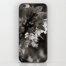 White Profusion  iPhone & iPod Skin