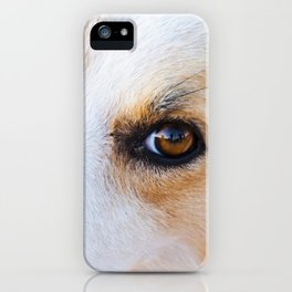 Portrait of a lovely stray dog iPhone Case