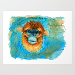 Golden Snub Nosed Monkey Art Print