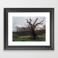 The Laund Oak Framed Art Print