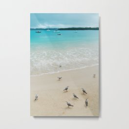 A group of seagulls on the beach at Kuto Bay, New Caledonia. Metal Print