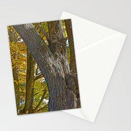 AUTUMN ACER MACROPHYLLUM (AUTUMN BIGLEAF MAPLE) Stationery Cards