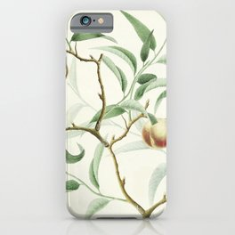 The Golden Apples of the Sun iPhone Case