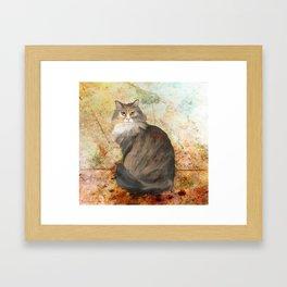 Maine coon cat Framed Art Print