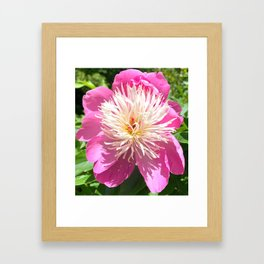 Pretty in Pink Peony Framed Art Print
