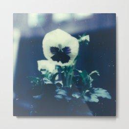 Pansy Bloom Metal Print