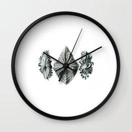 Clam Shell Trio Wall Clock