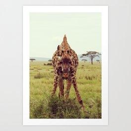 Giraffe Wants to Know Art Print