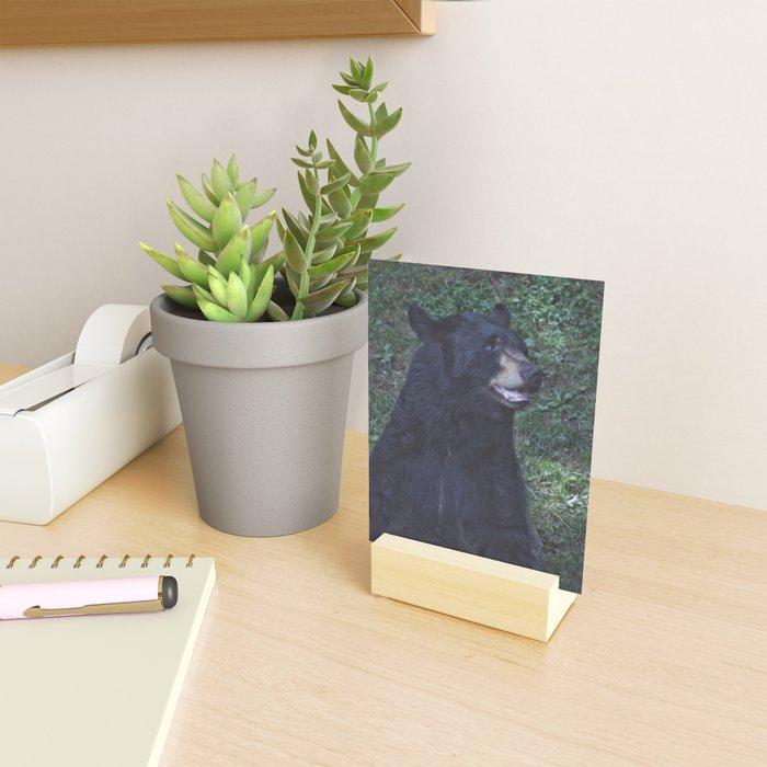 Black Bear Portrait Mini Art Print