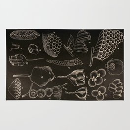 Wasp Architecture Rug