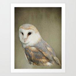 Barn Owl Portait Art Print