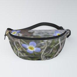 Wildflower Bluets Fanny Pack