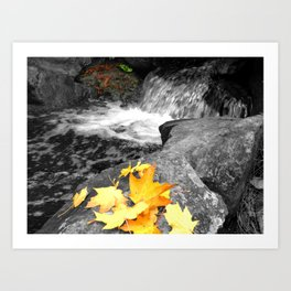 A Splash of Fall Art Print