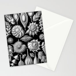Sea Shells (Thalamophora) by Ernst Haeckel Stationery Cards