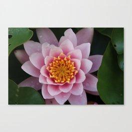 Pink Canvas Print