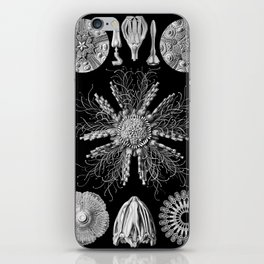 Sand Dollars (Echinidea) by Ernst Haeckel iPhone Skin