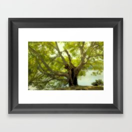 "Tree of Life "" Color"" Framed Art Print"