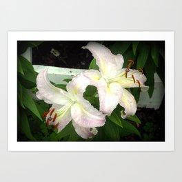 Two Beautiful Lilies Art Print