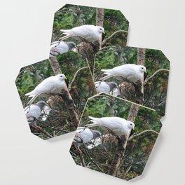 Doves Coaster