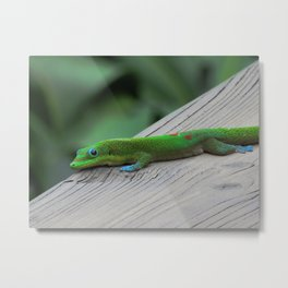 Relaxing Gecko Metal Print