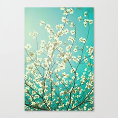 The dogwoods are blooming. Canvas Print