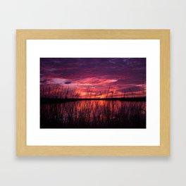 through the reeds Framed Art Print