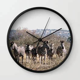 Wild Zebras Herd Kruger National Park, South Africa Wall Clock