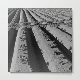Potatoes Metal Print