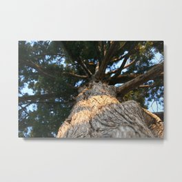 Grounded by Meredith Scrivner Metal Print