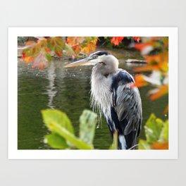 The heron waits Art Print